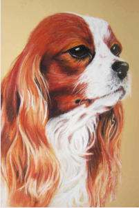 Cavalier King Charles, Pastell